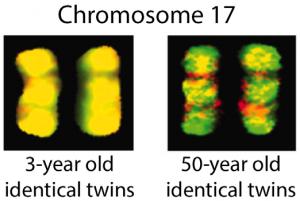 HorizonsInBioscience-Chromosome17-522x350