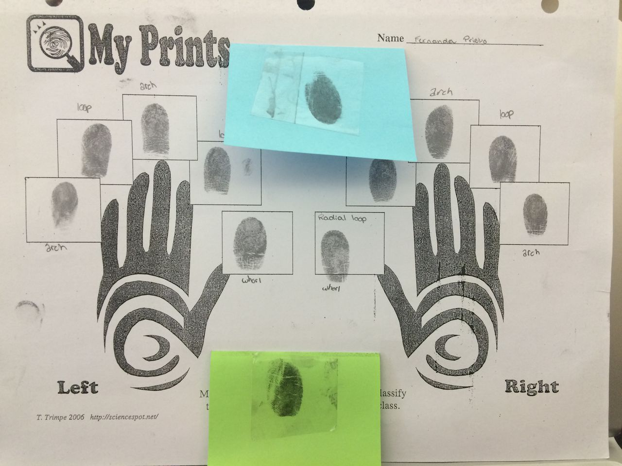 Fingerprints done in class to help classifying which kind of fingerprints they were and collection of fingerprints on objects.