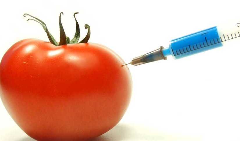 Genetically Modified Organisms, the Step into a Golden Age, or the End of Mankind?