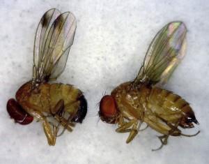 483731_453817-Berry-Pest_Quin