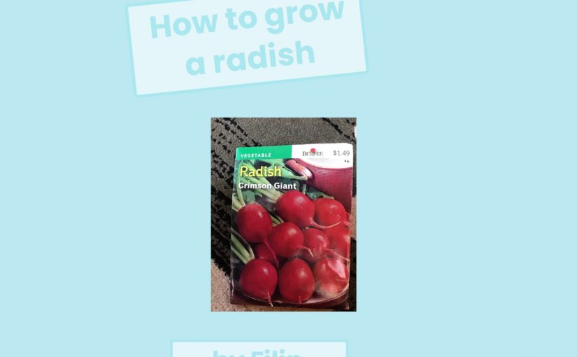 How to Grow a Radish