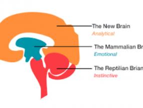 """Lizard"" Brains ~ A Essay about the Mind"